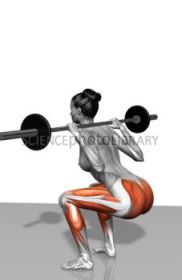 Barbell squat exercises (Part 1 of 2)
