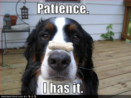 Patience. I has it.
